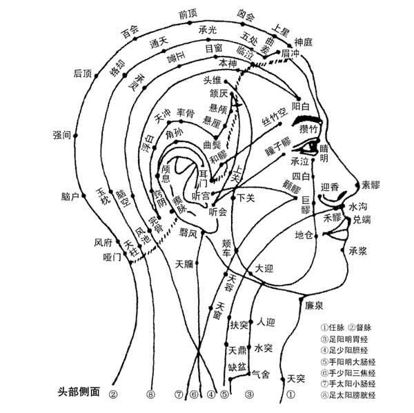 人体动脉分布图 女性人体结构图